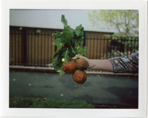 Orange Beet on Flickr.Polaroid Land Camera 103 Fuji FP-100c Silk
