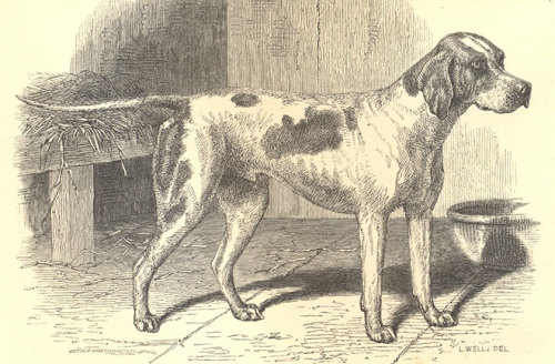 "Gallery:  The Earliest Dogs A pointer named ""Major"" was identified this week as the first known example of a modern dog. A description of the dog was found in a now-obscure 1865 edition of a Victorian journal called The Field. It marks the earliest reported dog breed based on physical form and pedigree. Let's go walkies through the history of the modern dog…"