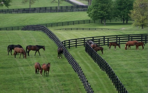 morningline:  Stonestreet Farm on a lovely Kentucky evening.