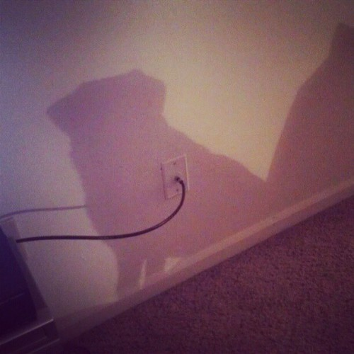 Who's shadow is this? #pug #cutepugs