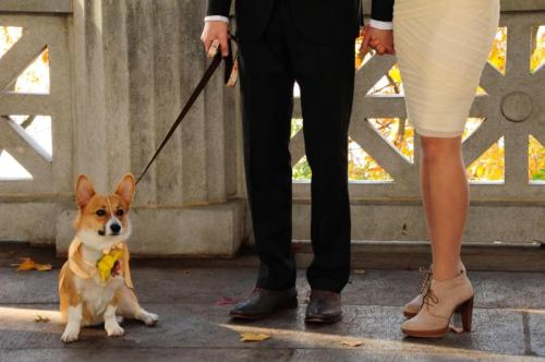 Got married in November…Miso was the flower girl/ring bearer.