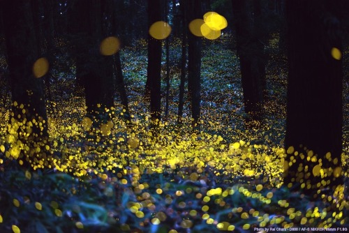 Long exposure of fireflies before dark