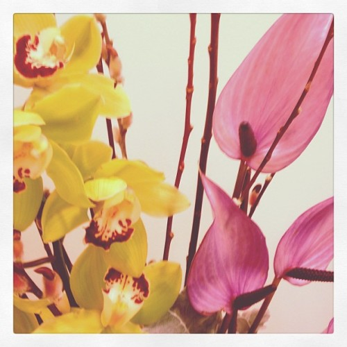 The promise of Spring #office #inspiration #flowers