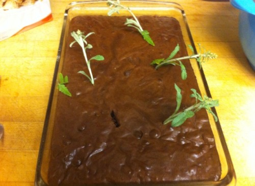donkaphobia:  tapdancers:  donkaphobia:  donkaphobia:  made some weed brownies lmao!!!  fuck u guys this was hilarious  you ruined good food  and yet i still ate them all   WHY WOULD YOU NOT SHARE?!