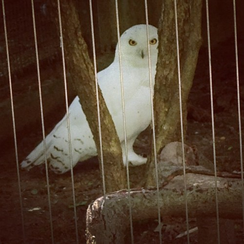 Hedwig!! (at Birds of Prey)