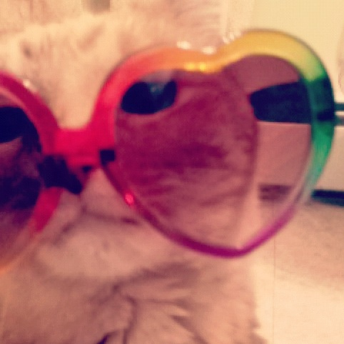get out of there cat. last time i checked you had zero needs for sunglasses.