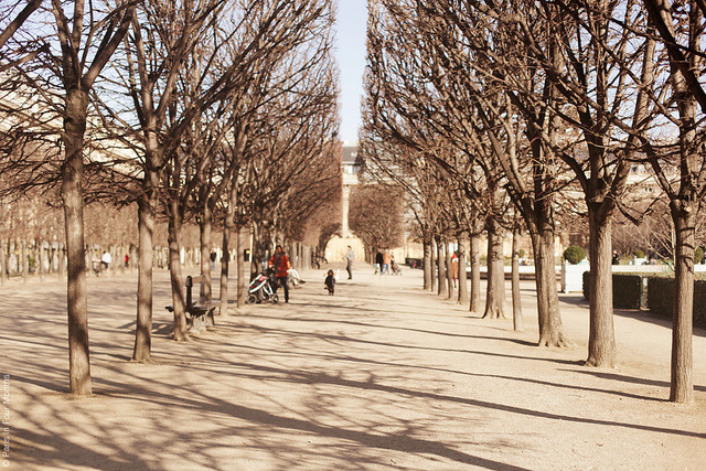| ♕ |  Jardin du Palais Royal - Paris  | by © Carin Olsson