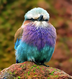 phototoartguy:  Have a Colourful Day (by Steve Wilson - need to up my game)