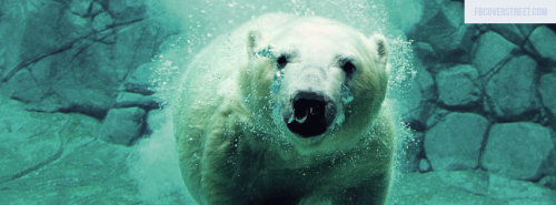 Swimming Polar Bear Facebook Cover