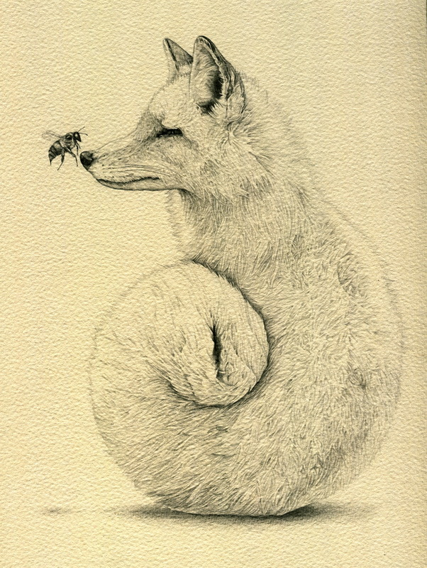 Amy Dover - The Fox And The Bee, 2012              Drawingshttp://amy-dover.blogspot.com/