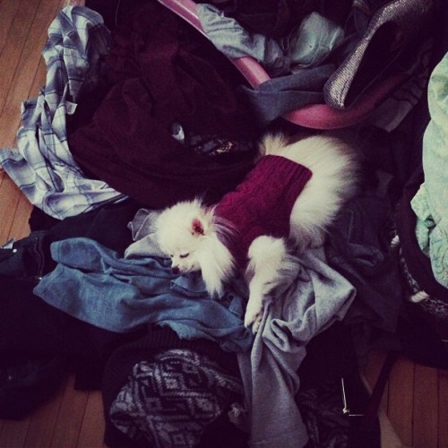 My little girl sleeping in my laundry :') #cutiepie #princess #doggiesweater #laundryday #iloveit #instadog #puppy #pomeranian #fluffernutter #igers #iggay #gay #gayboyproblems #dogsofinstagram #puppylove #thisisbeautiful #iwishiatemeat  (at Mayhem Manor)