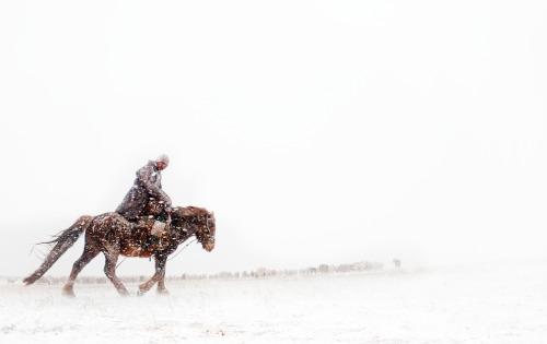 A Mongolian herder rides out to check on his animals during a snow storm. Over the past decade Mongolia has had several dzud - harsh winters when animals cannot find enough food to eat under the snow and die by the millions. There is some worries that this winter will be another dzud. In the past, there has been one dzud every couple of decades, but climate change has increased their frequency. Photo by Taylor Weidman.