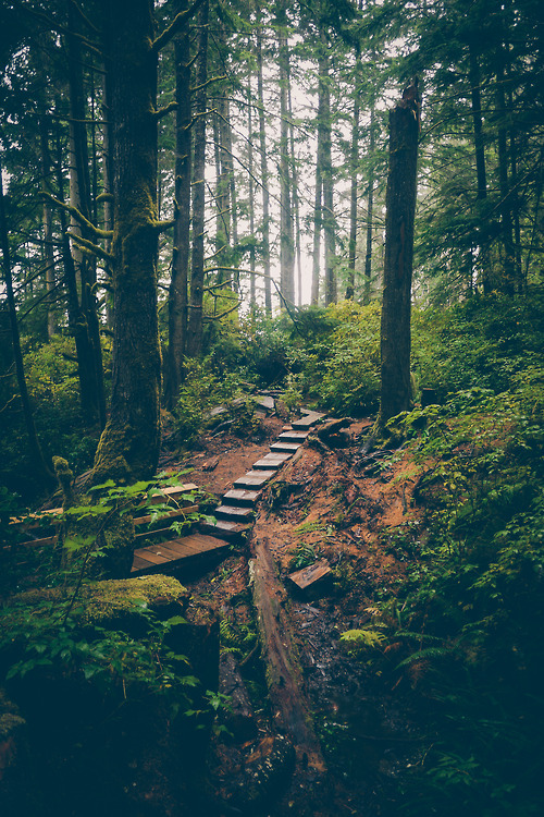 Forest Path, British Columbia, Canada photo via meghan