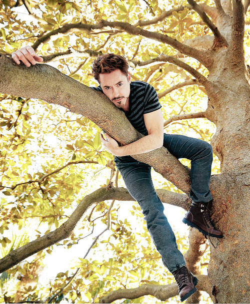 "copperbadge:  levynite:  It's an RDJ In A Tree  ""Robert, you're not helping."" ""What am I not helping? I'm very helpful."" ""I was just, I was hoping one day the ridiculous photoshoots would end. But there you are, in your forties, up a tree. Is this my future?"" ""Fuck you, I'm a jaguar. Anyway, it does get better."" ""How?"" ""You'll notice nobody has asked me to take any of my clothes off. I know you don't think this now, but someday, you will be grateful to the photographer who says No, Chris, you can leave your shirt on."" [RDJ Advises Chris Evans on his Life Choices]"
