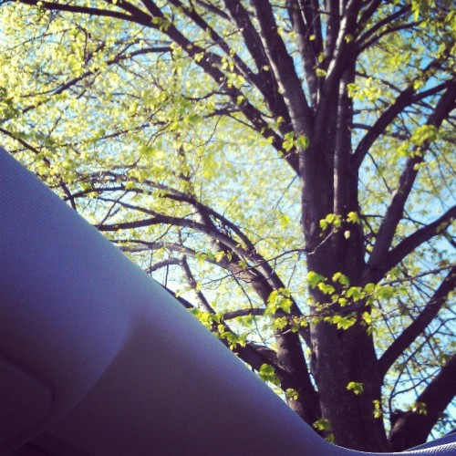 Thanks sun roof. You've made traffic much better.