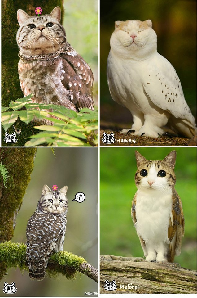 synsabre:  kittydoom:  CAT OWLS  I don't know what's going on, but it's adorable.