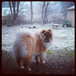 "In Evils mind…""What the fuck is this white stuff?!"" Lol #Cutest #Dog  #Ever #Evil #Fluffy #Snow #Instagood #Instadog #Instagram"