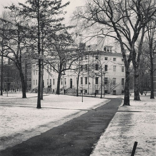 Harvard Yard in the snow.
