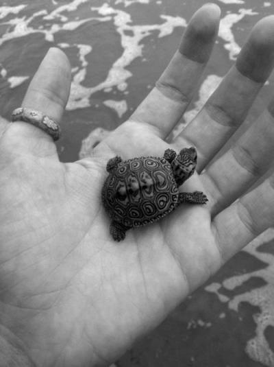 niick4:  its shell is so cool (found on weheartit)