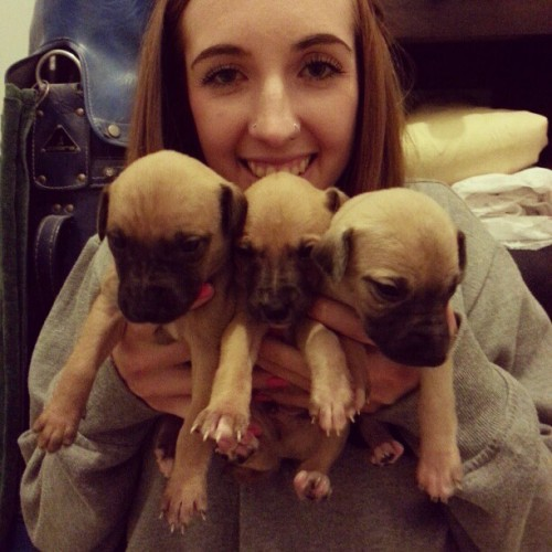 Went to Mums house and met all of Daphne's puppies last night.