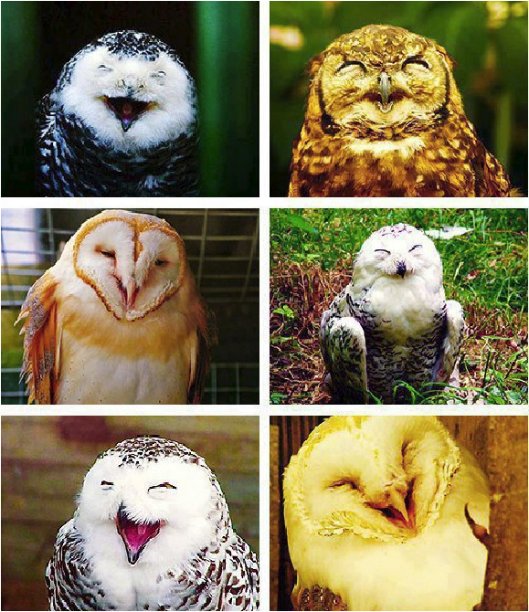 a30k:  Happy Happy Owls for you to brighten up your day :D