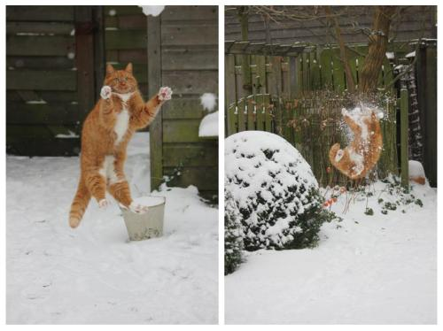 buzzfeed:  This is what happens when a cat attacks a snowball.