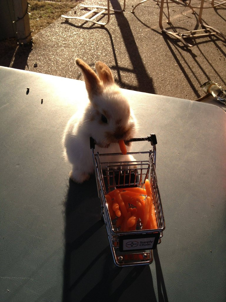 loveyababe:  me when i grocery shop
