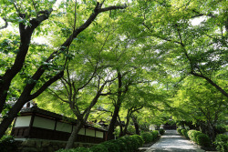 This is Saikyoji Temple is Otsu city. If you have time, please visit!