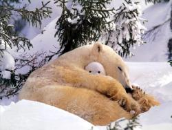 magicalnaturetour:   Bear Hug :)