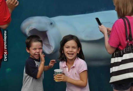 9gag:  Got photobombed by a beluga at the aquarium.