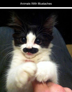 cat LOL funny animals caturday steampunk pipe monocle mustaches steam punk steampunk tendencies Steampunk Cat
