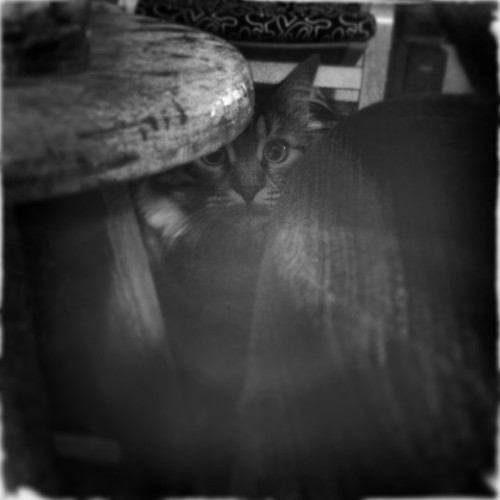 #igers #igersturkey #photitos #cat #cat_lovers #hipstamatic #bw #hidden #instagram  (Raingini Malikanesi'da)