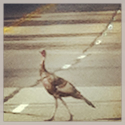 #Turkey#Crossing