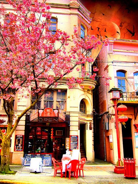 gotupearly:  Spring in Chinatown series on Flickr.