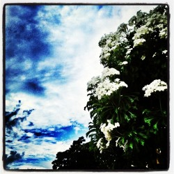 #clouds #flowers #simple_life