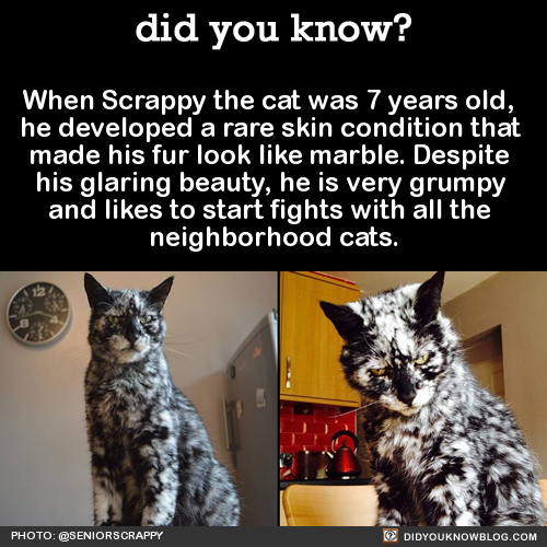 when-scrappy-the-cat-was-7-years-old-he-developed