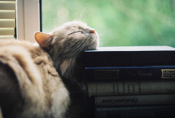 I wonder what cats dream of and what their stories are…