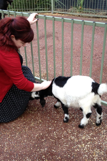 gameraobscura:  look its gen patting this cool baby goat. i patted this goat on the head and on the side and it was the SOFTEST thing ive touched in so long. i thought goats would have wiry coats because they eat wire (ive heard they eat wire) but it was softer than a kitten with pipe cleaners for bones. just after this photo was taken the goat tried to eat gens skirt and then chewed her shoelaces.  You can actually see how his head is to the side, gathering up bits of my skirt in his little tiny mouth. Such a cute little bastard though.
