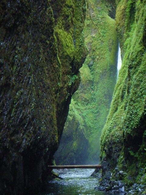 Log Bridge, Oneonta Gorge, Oregon photo via deborah