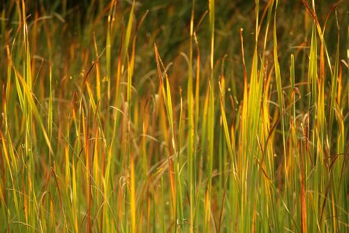 photographers on tumblr landscape cattails september autumn fall walking-geema