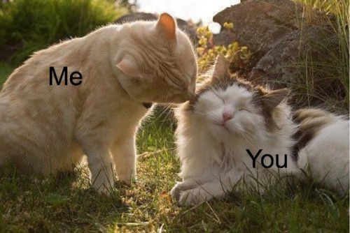 wlw positivity wlw wholesome memes gf memes cats mine