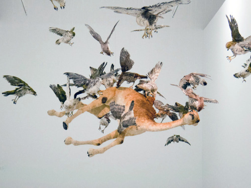 Cai Guo-Qiang - Flying Together (2011) d