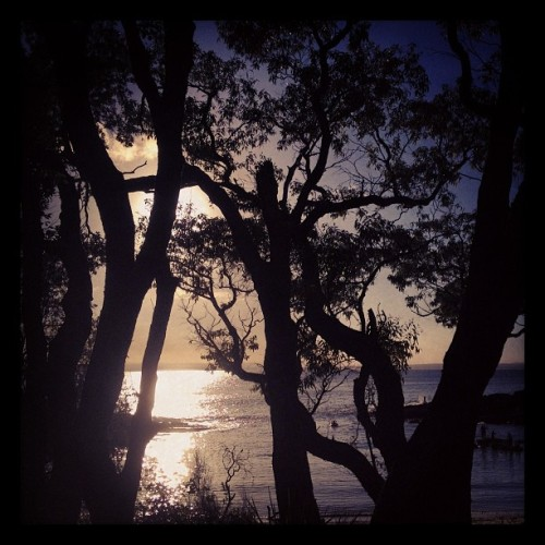 #WHPthroughthetrees #sunset at #JervisBay (at Honeymoon Bay)