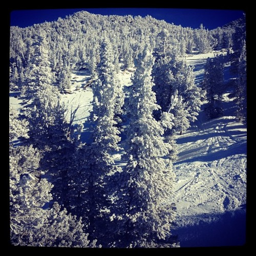 Winter wonderland. @skiheavenly Christmas Eve. #winter #winterisfun #snowboarding #sierras #heavenly #tahoe #trees #snow #mountains #southlaketahoe #laketahoe