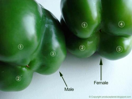 "True or false?  The Bell Pepper Fable: Male bell peppers have three lobes and the female has four. Fact….or fiction when it comes to Capsicum annuum?  The only ""relevant"" resource I was able to locate that might address the answer to this question (raised by one of my Facebook friends today) was at Helium.com where the discussion of three lobes vs. four lobes is outlined in some detail. The bottom line: there's a lot of discussion, but not necessarily a definitive answer one way or the other, after reading the article.  My own conclusion: it appears that the Fable of the Lobes may not be true, but I'd love to hear from someone well-versed in plant reproductive morphology who can shed more light on this issue.  The good news: bell peppers provide many health benefits which are outlined at WebMD.com (whether they have three lobes or four). Bell peppers are nutrient-dense, and contain high amounts of Vitamins A and C, and just one cup a day provides 100% of your daily A and C requirements. Bell peppers also provide protection against certain diseases and cancers, so go ahead - make a selection, any color, three lobes or four. A few recipes, here."