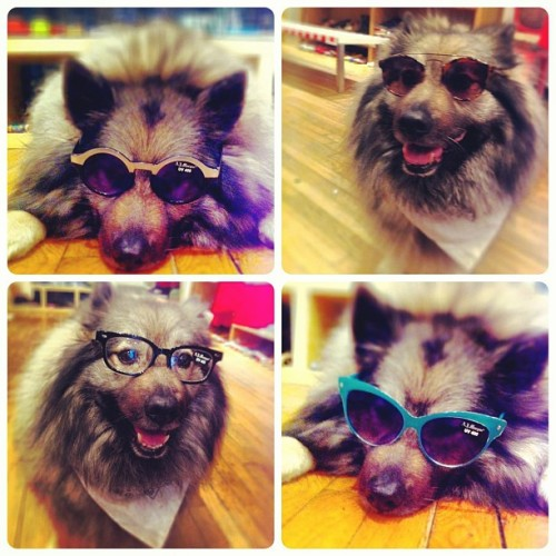 Tons of new sunglasses and frames at POP! #shoppop #oscarshoppop #puppypalace