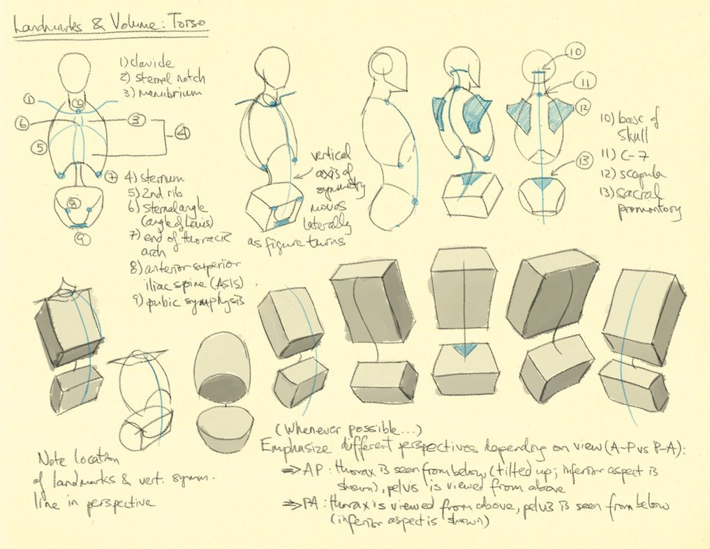 Female Character Design Tutorial : Drawing illustration torso art reference tutorial