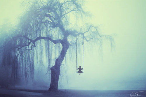 The Weeping Willow | www.chillingtalesfordarknights.com