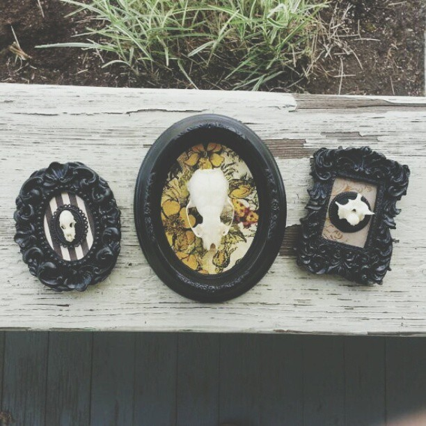 ladylockslife:  Some new things I finished up yesterday! Bat skull, mink skull, and python vertebrae. Will be on etsy soon.