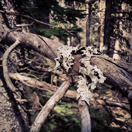 Bark on Branch #Calgary #Alberta #Canada #nature #hipster